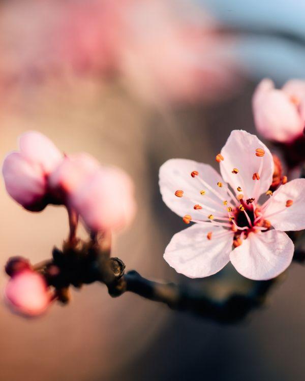 https://alternativ.nl/wp-content/uploads/2021/04/spiritual-flower.jpg
